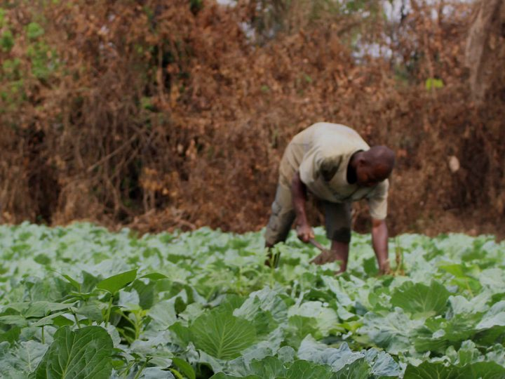 Rethinking African Agriculture